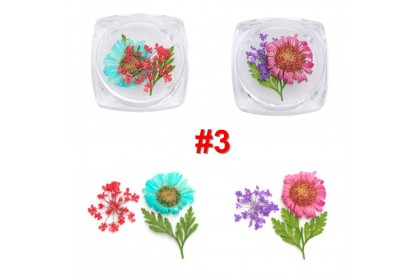 Natural Dried Flowers, 2 boxes